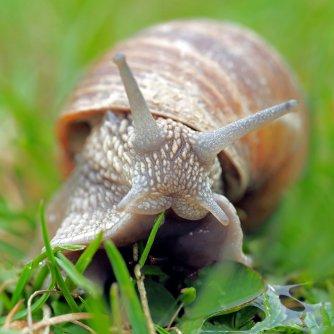 Escargot 1jpg