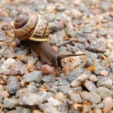 Escargot 4