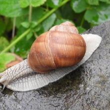 Escargot 5