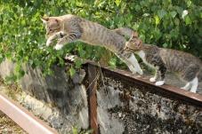 Chat qui saute