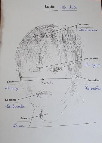 La tête les différentes parties dans 2 écritures
